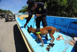 A Salvadoran drug sniffing dog