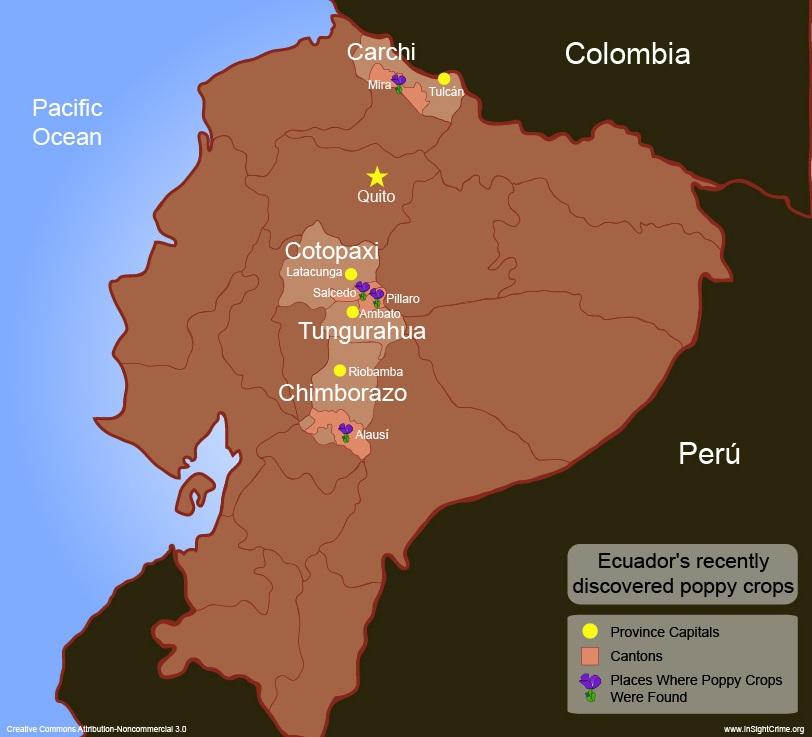 EcuadorPoppypresence
