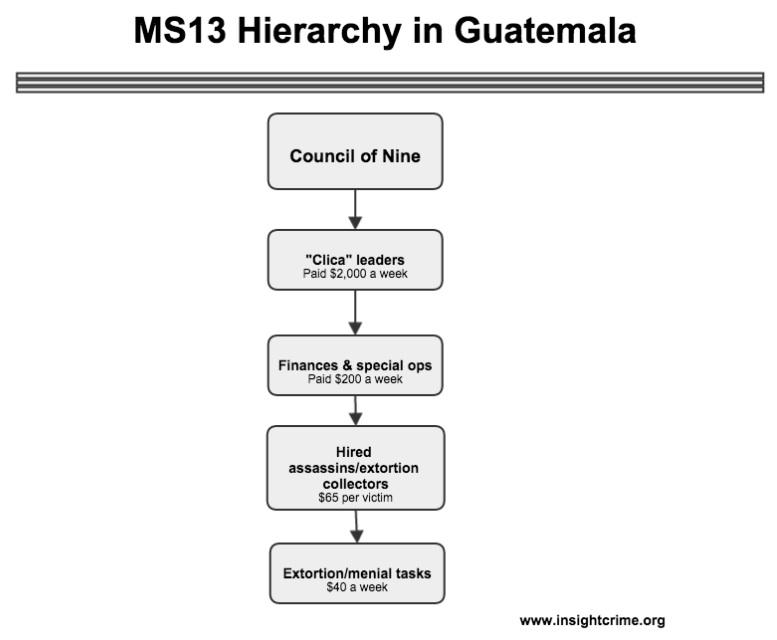MS13 Hierarchy