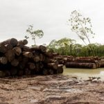 Illegally harvested lumber in Buenaventura, Colombia