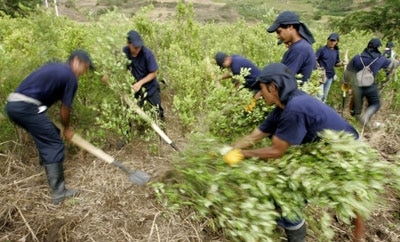 Manual coca eradication, Peru