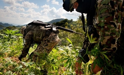 Mexican soldiers eradicating marijuana crops