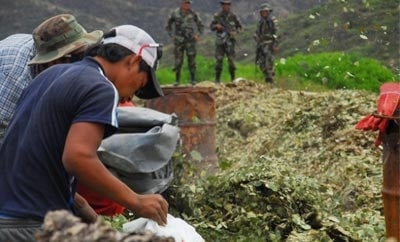 Coca seized in Bolivia in 2009