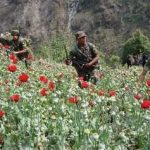Guatemalan soldiers eradicating poppy crops in San Marcos