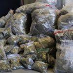 A marijuana bust in Canada