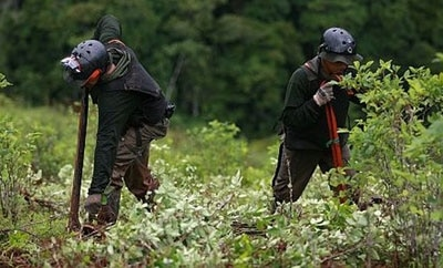 Coca eradicators in Peru