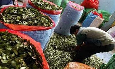 A coca market in Bolivia