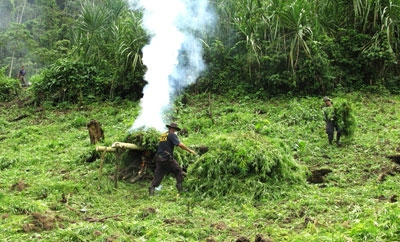 A security official burning marijuana crops in Costa Rica