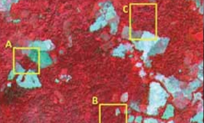 Infrared aerial photograph shows destruction of primary forest