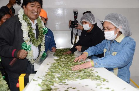 President Evo Morales at a coca factory