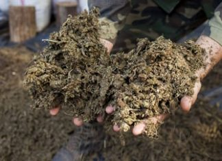 Marijuana confiscated in Paraguay