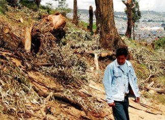 Illegal logging causes major forest loss in Ecuador