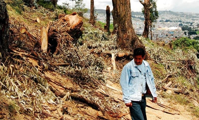 Illegal logging causes major forest loss in Ecuador