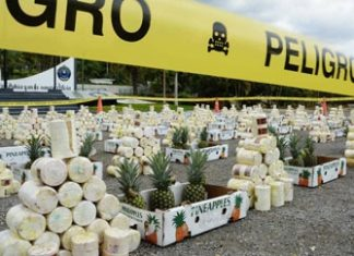 Drugs hidden in pineapples recovered in Guayaquil port