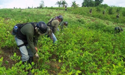 Peruvian eradicators in the Upper Huallaga Valley