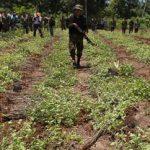 Bolivian forces eradicate coca