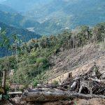 Drug trafficking causes deforestation in Central America