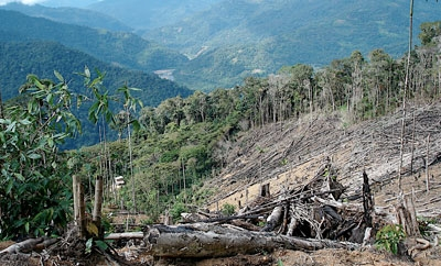 Drug trafficking causes deforestation in Central America