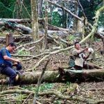 Illegal loggers in Nicaragua's Bosawas Reserve