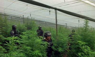 Honduras police in the greenhouse