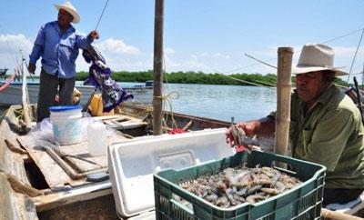 Sinaloa shrimp fishermen