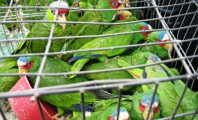 Birds are among the most commonly trafficked animals