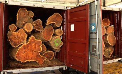 Cocobolo wood seized in Panama
