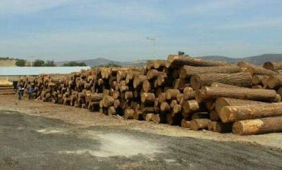 Seized wood in Michoacan