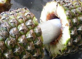 Cocaine inside a pineapple from Costa Rica