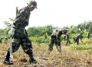 Soldiers eradicating coca in the Chapare region
