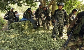 Peruvian soldiers confiscating coca leaves