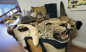 Animal products confiscated at MIA