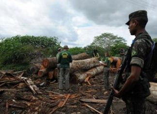 Illegal logging is worth billions worldwide
