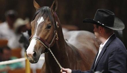 Testimony is from Zetas' racehorse money laundering case