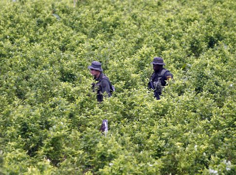 Colombian police walk through a coca field