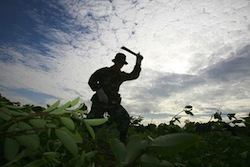 A Bolivian Soldier Chops Down Illegal Coca