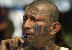 An MS13 gang member