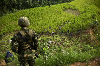 Coca eradication in Colombia