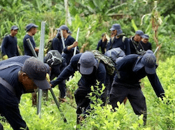 Colombian authorities carrying out manual eradication of coca crops
