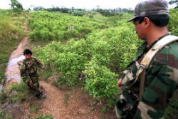 FARC guerrillas in Colombia