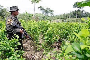 Coca crops in Catatumbo, Norte de Santander