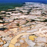 Illegal mining has destroyed virgin jungle