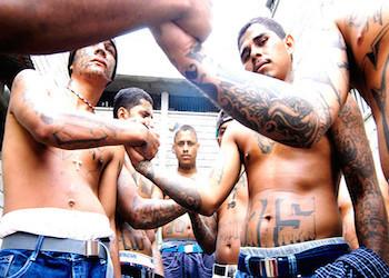MS13 gang members