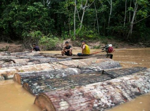 Loggers move tree trunks down the Putaya River in Peru