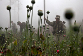 Mexico poppy eradication efforts