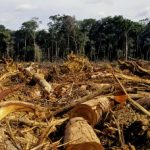 Drug trafficking has been linked to deforestation in Central America