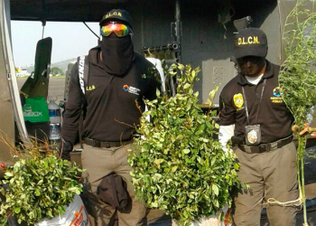 Honduran anti-narcotic agents with confiscated coca plants