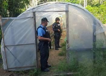 Police inspect Honduras coca plantation