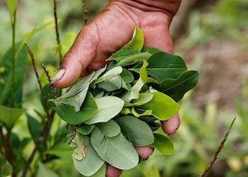 Colombia's government has set ambitious coca eradication goals