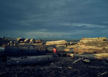 Illegal logging causes substantial deforestation in the Amazon